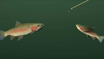 Catch More Trout   Fish The Hang