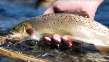 """Long Time Comin'"" - Fly Fishing Montana"