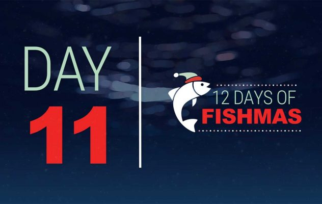 """Inside the Box: """"12 Days of Fishmas - Day Eleven"""""""