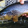 The Trick to Catching Trout Anywhere