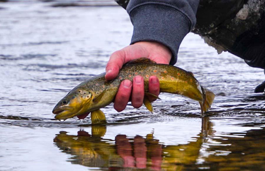 6 Best Flies for Winter Fishing
