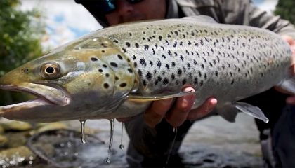 Fly Fishing New Zealand's Tongariro River