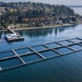 New Steelhead Farm in Puget Sound