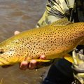 Essential Tips for Spring Streamer Fishing