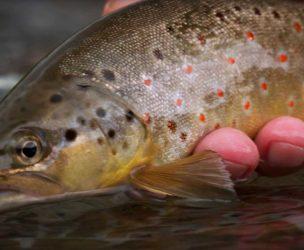 Small Stream Colorado Fly Fishing