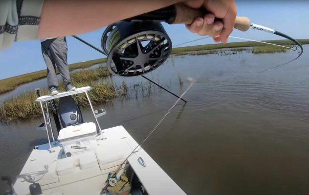 Redfish in the Marsh, Louisiana (Humor)