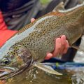 Lake Superior Steelhead: Tips to Land Your First Chrome