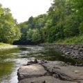 DEC Reopening Salmon River in NY