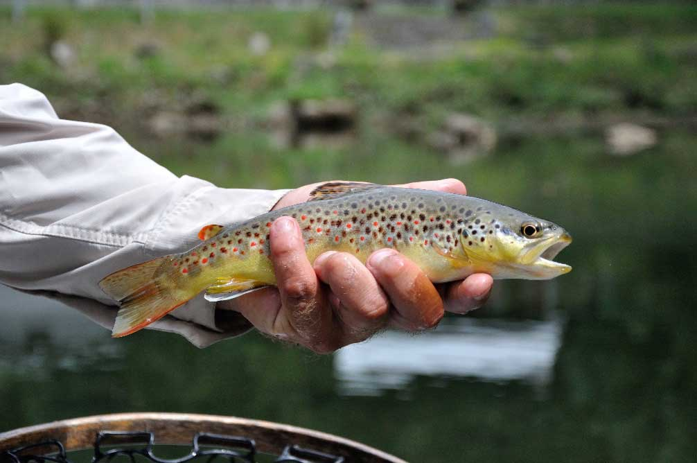 Fly Fishing Conservation