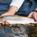 Trout: What's In a Name?