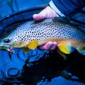How to Catch Trout on Streamers This Winter