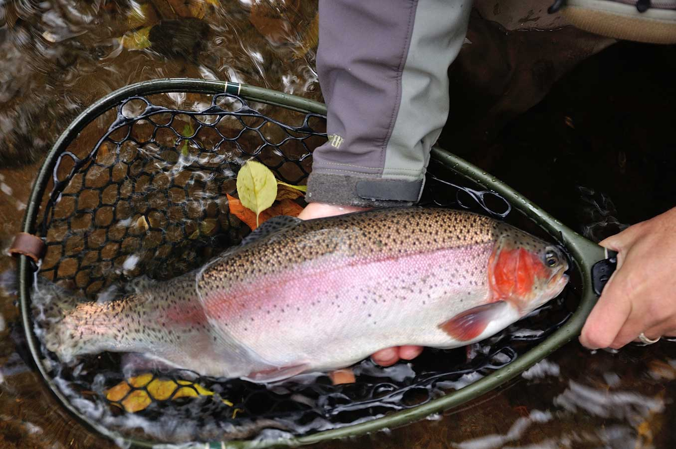 Stocked Trout Fly Fishing