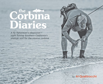 Fly Fishing for Corbina
