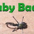 Tying Tuesday: Baby Baetis