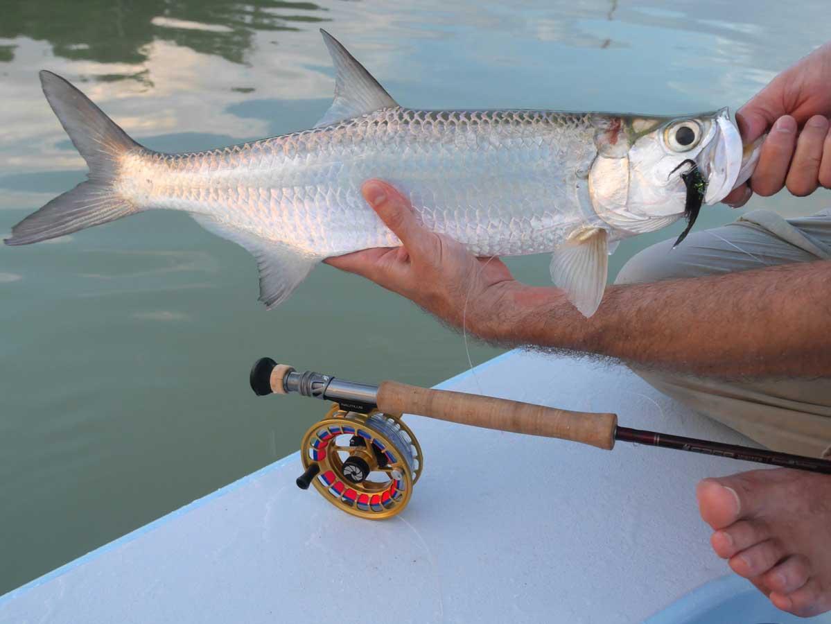 Fly Fishing for Baby Tarpon