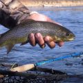 WETFLY Debuts New Glass Rods