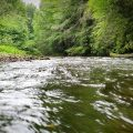 Column: Hope and Fly Fishing