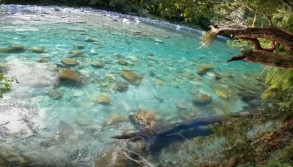 """""""Fly Fishing Some of the Most Amazing Looking Water I've Ever Seen"""" (New Zealand)"""