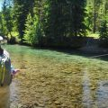 Dry Fly Fishing Cutthroat Trout - Stunning Dry Fly Fishing at the Peak of Summer in Alberta