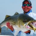 Conserving Menhaden, Other Saltwater Fish