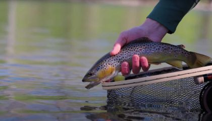 """""""Down By The River 