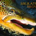 Migratory Browns