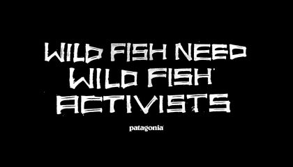 Survive and Thrive: Patagonia Incites Wild Fish Activism
