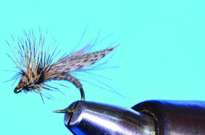 resting caddis fly