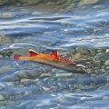 Montana Closes Rivers to Fishing