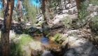 """""""Catching Golden Trout in their Native Range—Golden Trout Wilderness! (Tenkara Fly Fishing)"""""""