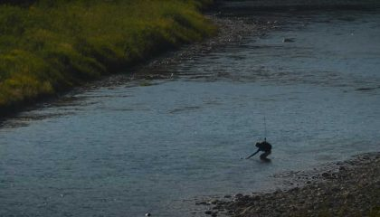 """""""Fly Fishing Brown Trout in Wind- Casting, Line Control & Locating Trout at Peak Summer Conditions"""""""