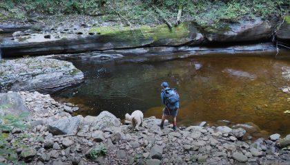 """""""Creek Fishing for Beautiful Trout!! (Fall Trout Fishing)"""""""