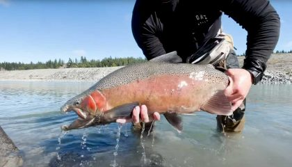 """""""Catching Mammoth Trout Most Could Only Dream Of From Manmade Canal"""""""