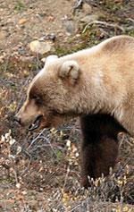 bearspray_200.jpg
